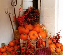 LA ZUCCA di Halloween e le sue Proprietà