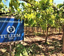 Tullum, la più piccola DOCG italiana
