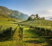 Un viaggio in Alto Adige attraverso l'annata 2019