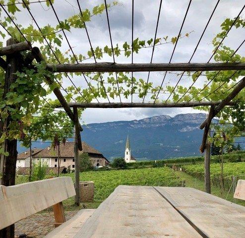 esterno e vigneti Cantina di Bolzano